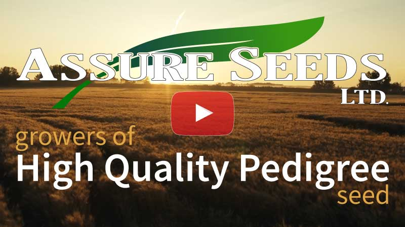 Assure Seeds Video